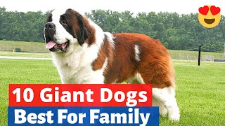 The 10 Best Giant Dog Breeds that make Great Pets