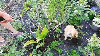 Котик Помогает сажать цветы 🐈 Кот садовод хитсад 🐈 Прикол с Котами