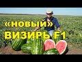 АРБУЗ «новый» ВИЗИРЬ F1. Бесконечная урожайность!!!!
