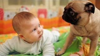 Chó Buồn Cười Em Bé Khó Chịu - Con Chó Dễ Thương