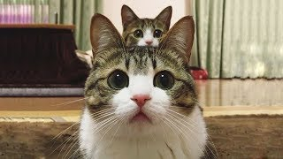 Cute is Not Enough - Funny Cats and Dogs Compilation #188