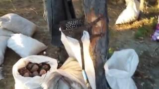 Верховья р Абакан отдых рыбалка сбор шишки(порыбачили набрали кедрового ореха., 2016-10-01T16:20:36.000Z)