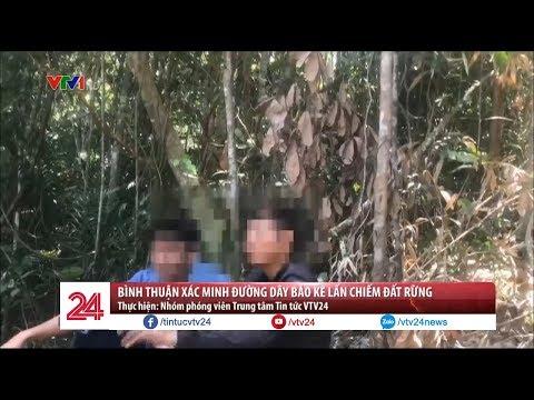 Bình Thuận xác minh đường dây bảo kê lấn chiếm đất rừng | VTV24