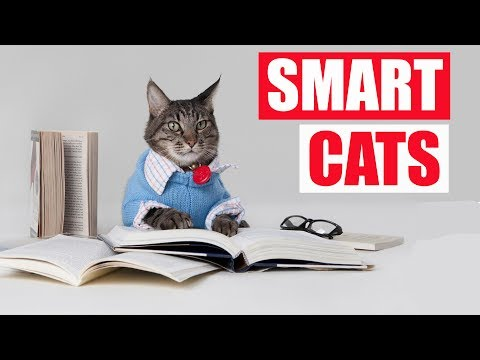 Smart cats Complication 2017