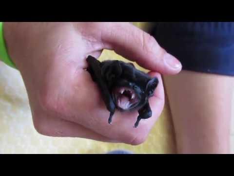 Baby bats running amok