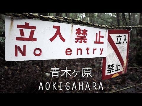 Aokigahara | 青木ヶ原 | Die dunkle Seite von Japan