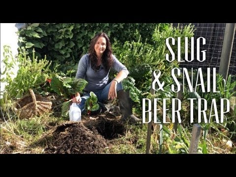How to STOP Slugs & Snails - Make a Beer Trap