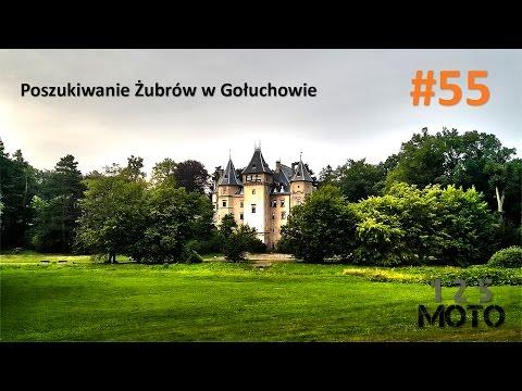 Poszukiwanie Żubrów w Gołuchowie - 125moto #55