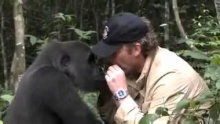 Встреча человека с гориллой, которую он вырастил