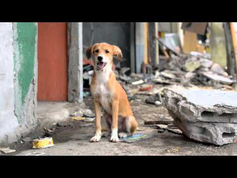 World Animal Protection in Ecuador with aid