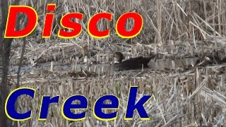 She Left Us Today Disco Duck At The Creek #20 Hatching Duck & Goose Eggs