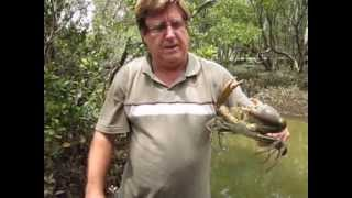 Mud Crabbing Brisbane Australia