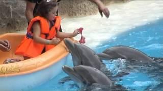 СП. Шоу дельфинов в Лоро Парке/Тенерифе
