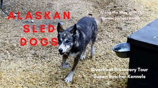 Susan Butcher Kennels - Dog Sled - Alaska - Riverboat Discovery Tour - Iditarod Sled Dogs 🐕