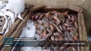 مصر العربية | أسعار السمك فى السوق المصرى