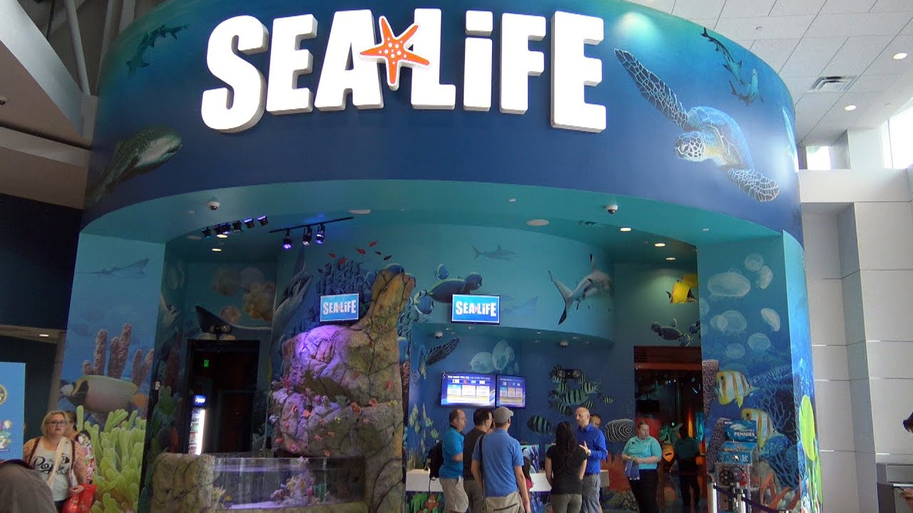 Sea Life Aquarium New I Drive 360 Entertainment
