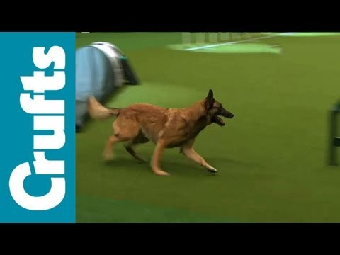 Extended look at Crufts 2012's Agility Contests - Small, Medium and Large Breeds