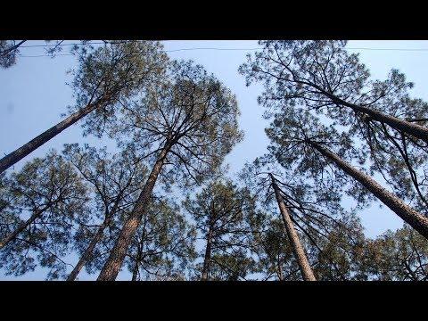 Uttarakhand Forest Department ने चोरी की लकड़ी का ट्रक्टर ट्रॉली को पकड़ा