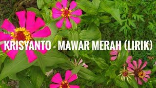 Krisyanto - mawar merah (Lyrik)