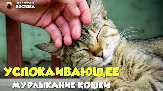 Успокаивающее мурлыканье кошки - music for meditation 60 min - музыка для медитации 60 минут