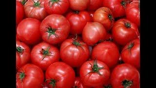 Российские и турецкие помидоры. Что лучше?