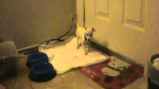 how to potty train your chihuahua doggy doggy