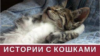 Прикольные истории с кошками