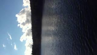 Orcas - Quadra Island