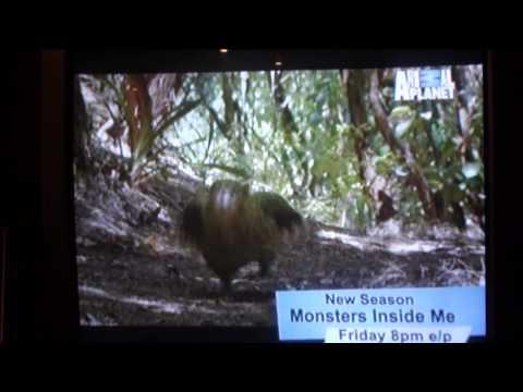 A Kakapo Running!