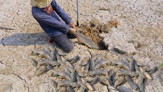 AMAZING FISHING VIDEO 2020!Dry Season Catching A Lot Of Fish Underground By Village Hunter