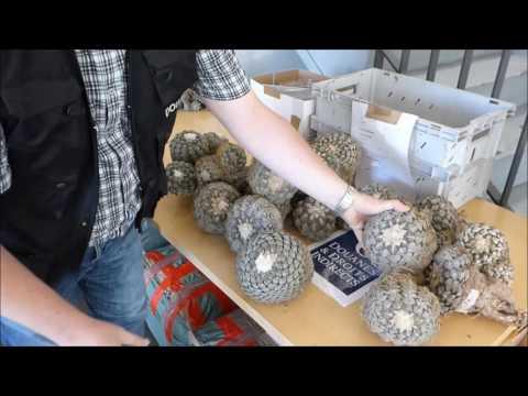 Saisie de 369 cactus protégés et menacés d'extinction à Roissy