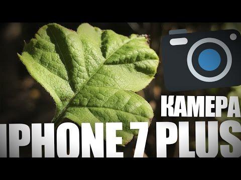 Камера iPhone 7 Plus. Давайте посмотрим фото