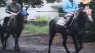 Stajnia Janów Podlaski - trener Włodzimierz Broniszewski - wrzesień 1995