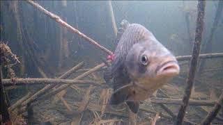 Зимняя рыбалка на карася подводная съемка 3 серия