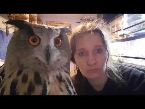 Смотреть Ты хочешь от совы мимими, а она тебе УГУ! онлайн