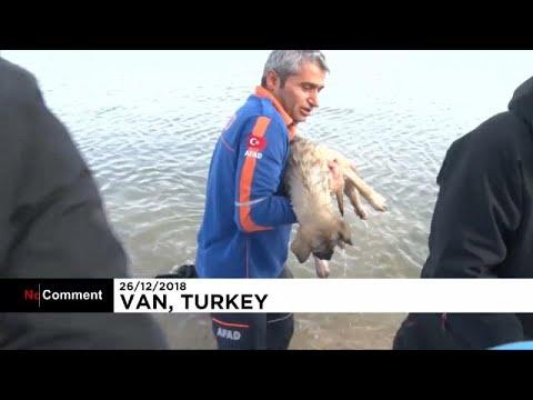 Milagroso rescate a un perro atrapado en un lago helado en Turquía