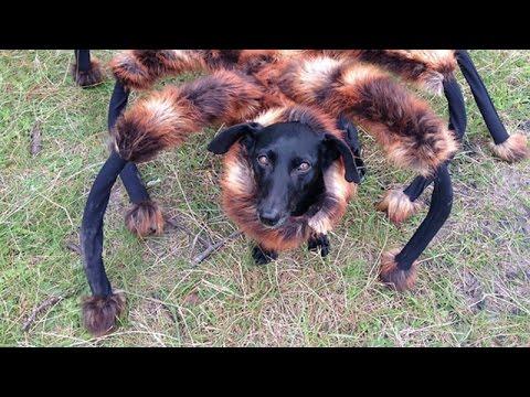 Pies Pająk Podbija świat Wywiad Z Sa Wardęgą Youtube