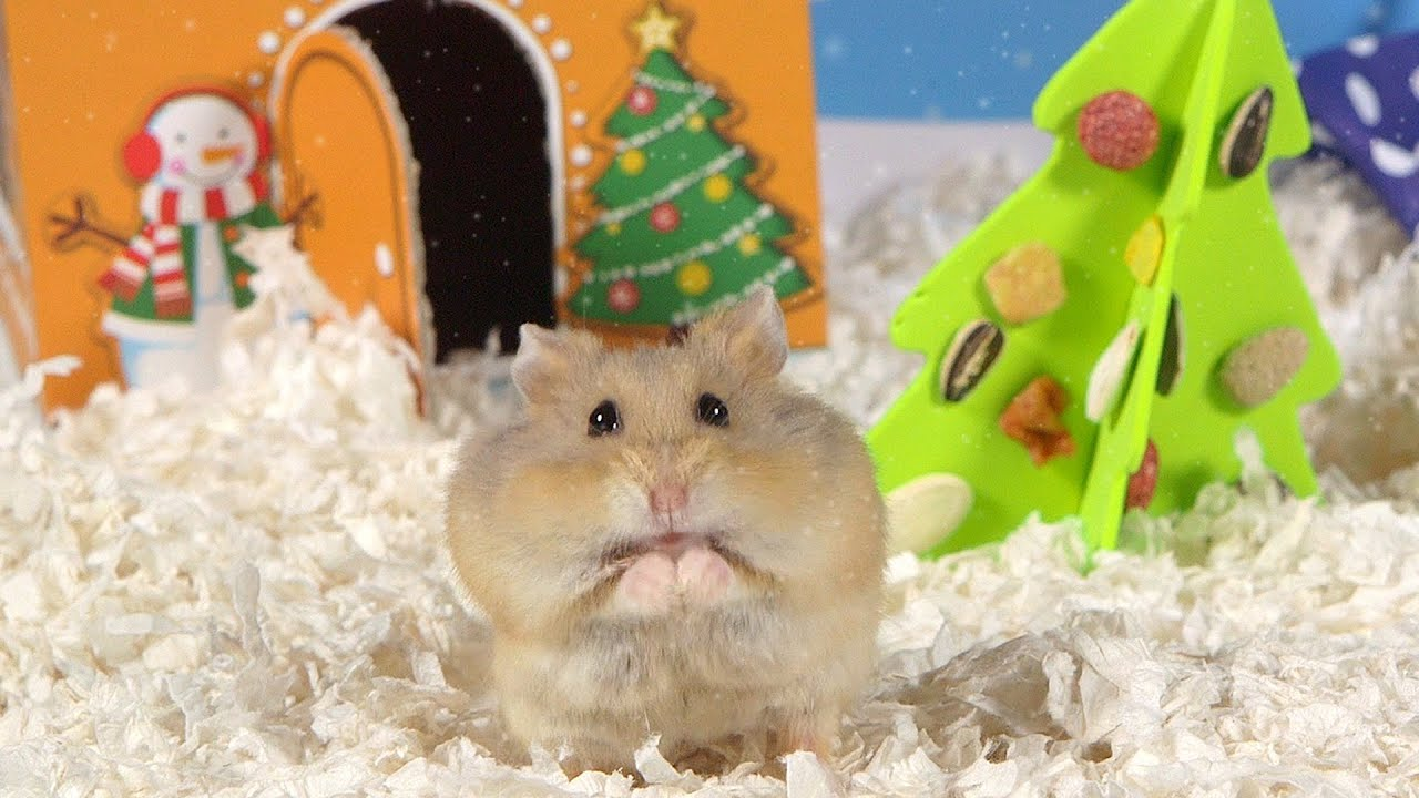 Reindeer Wallpaper Cute Day 2 O Christmas Tree Cute Hamsters 12 Days Of