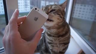 ПРОБЛЕМЫ С ВОССТАНОВЛЕННЫМ iPhone 5s С АЛИЭКСПРЕСС