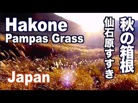 箱根観光 秋の仙石原すすき草原の黄金色の絶景 Hakone Travel GuideーSengokuhara Pampas Grass in Autumn  日本の秋 Discover Nippon