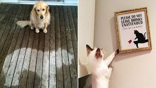 Animals Who Absolutely Don't Give A Damn