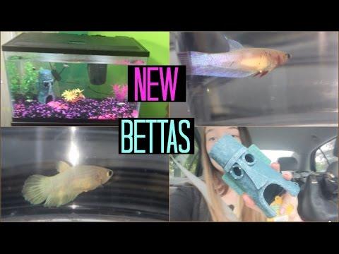 GETTING NEW BETTA FISH!!