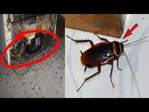 कोकरोच भगाने के असरदार घरेलू नुस्खा / Home To Get Rid Of Cockroaches from kitchen, home & Office - 동영상