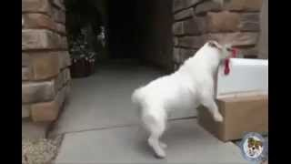 """Smart Dogs - """"Talented dog"""""""