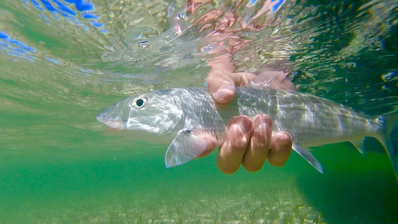 Fly fishing for bonefish in ambergris caye san pedro for Fishing san pedro belize