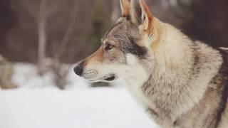 Caronte - YONI (official trailer)