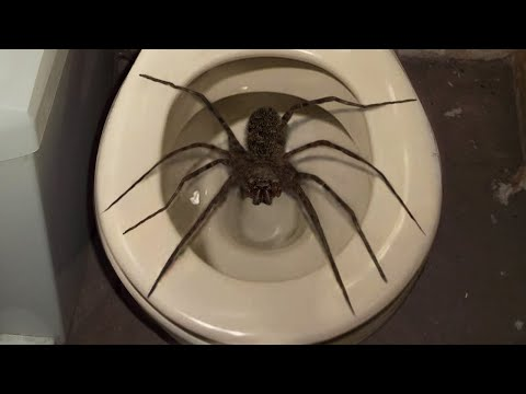 10 Biggest Spiders On Planet Earth