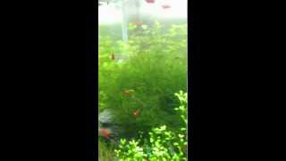 Nano Glass Co2 Diffuser For Aquarium Live Plants - The Effect Of Co2 Diffusibility (2-testing)