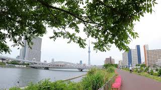 【4K】Tokyo Walk - Shirahige Bridge To Sensoji Temple (May.2021|Sumida River #5)