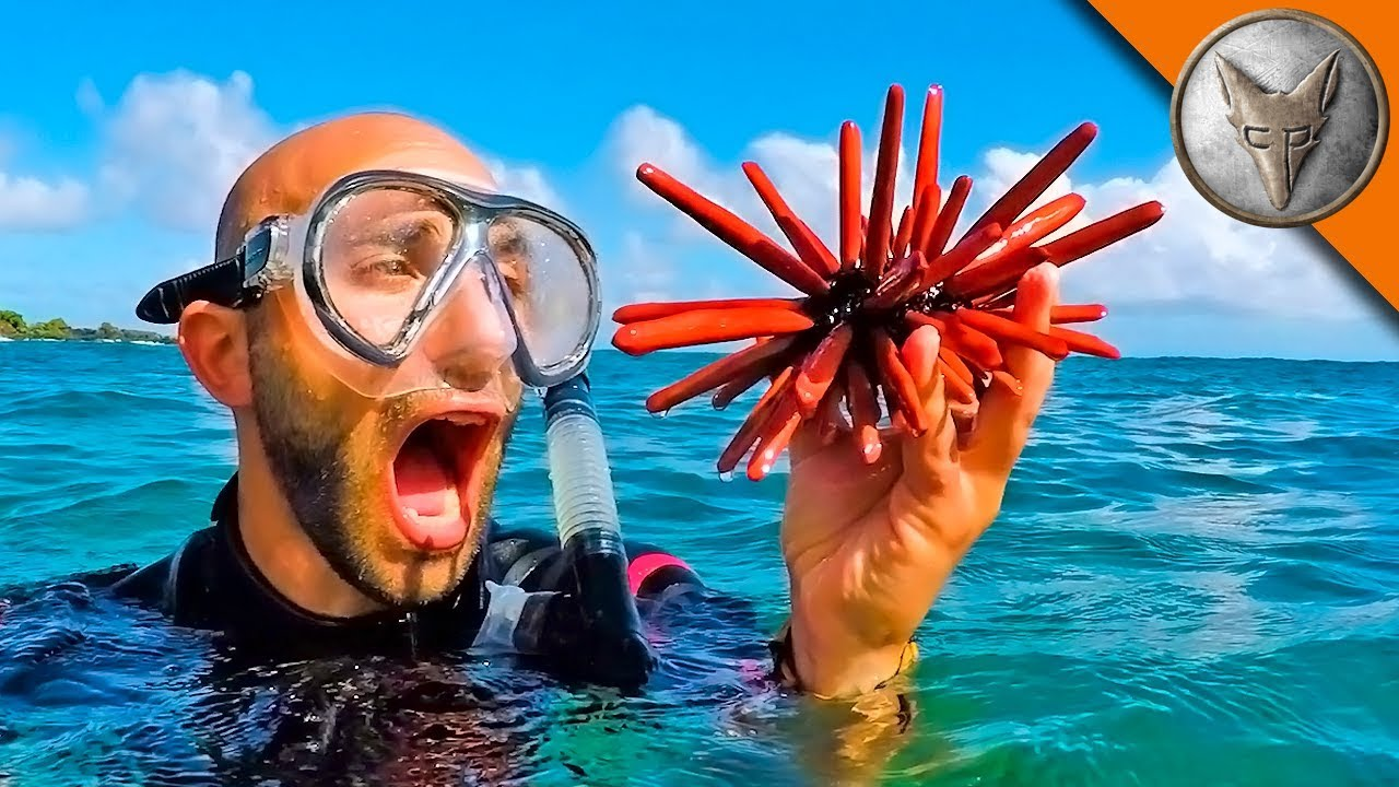 Fantastic Sea Creatures…and Where to Find Them!